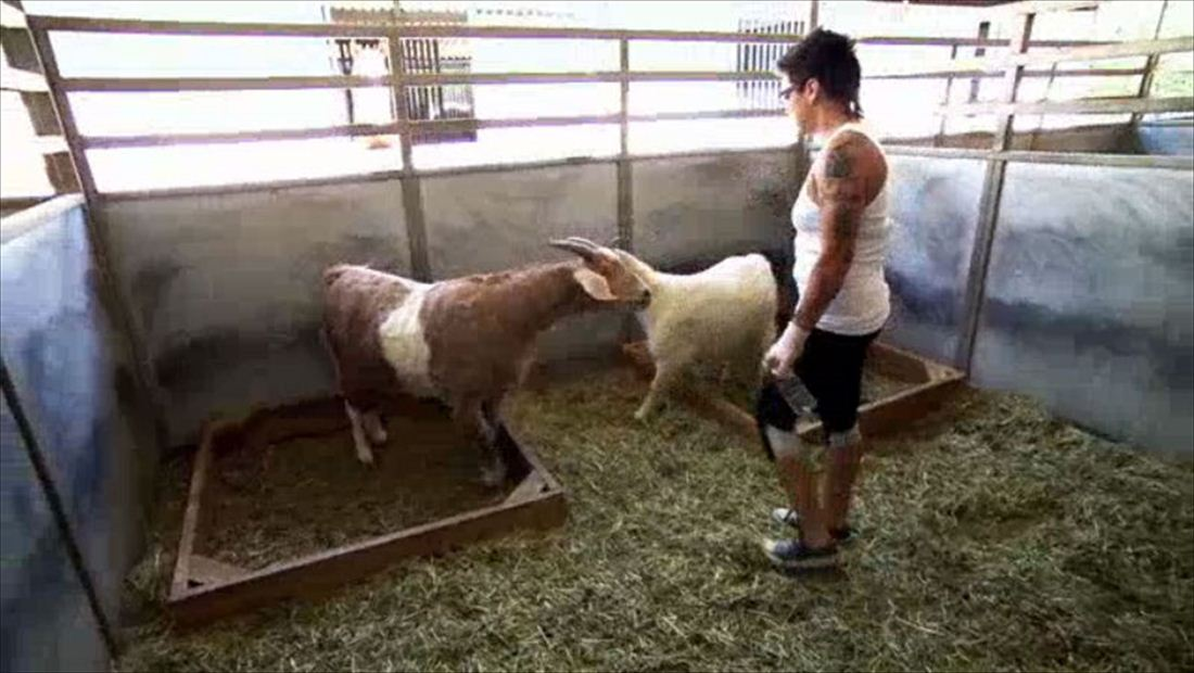 BGC Back For More: Bad Girls On The Farm